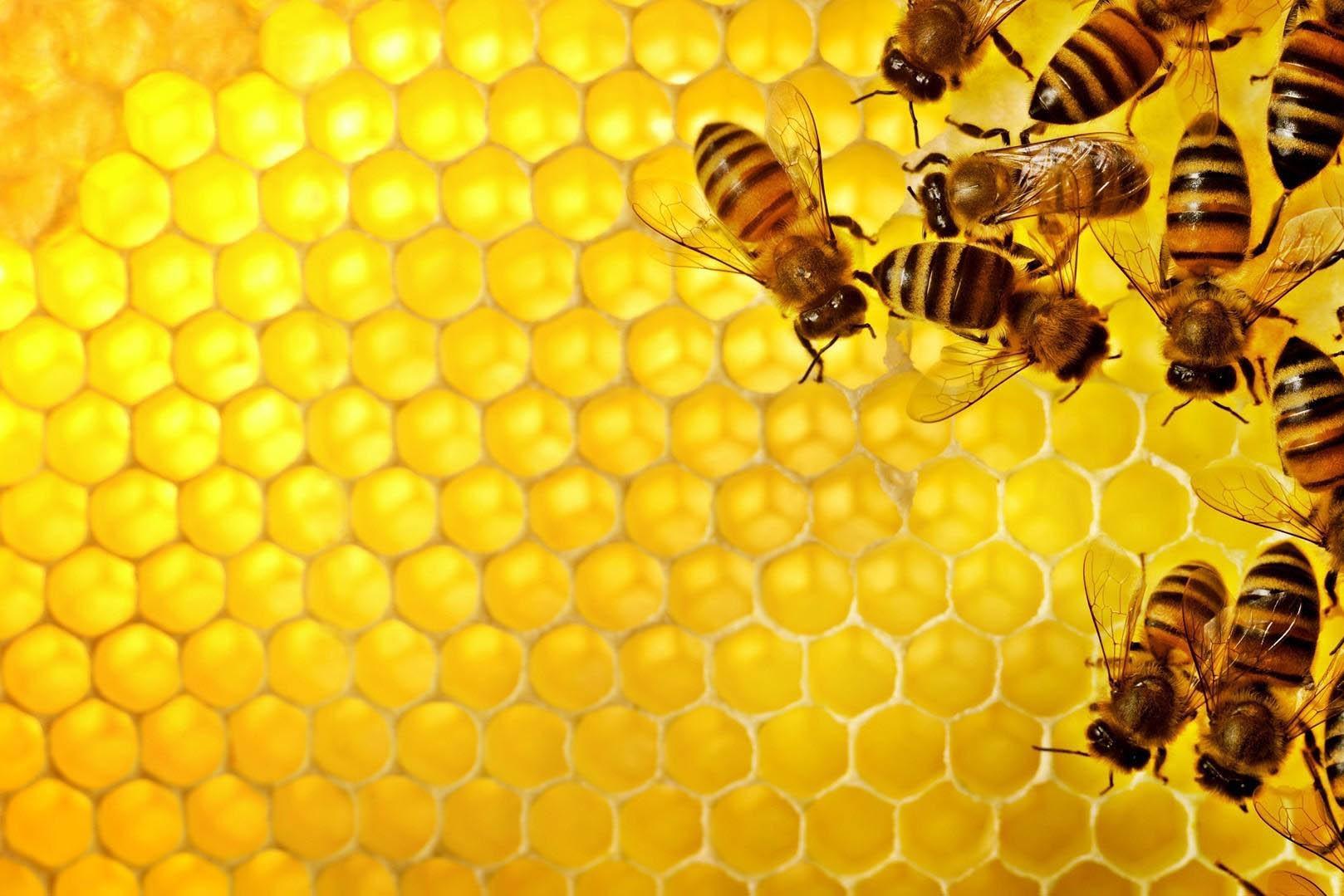 Focus Miele: api malate e produzione ai minimi storici. L'intervista.