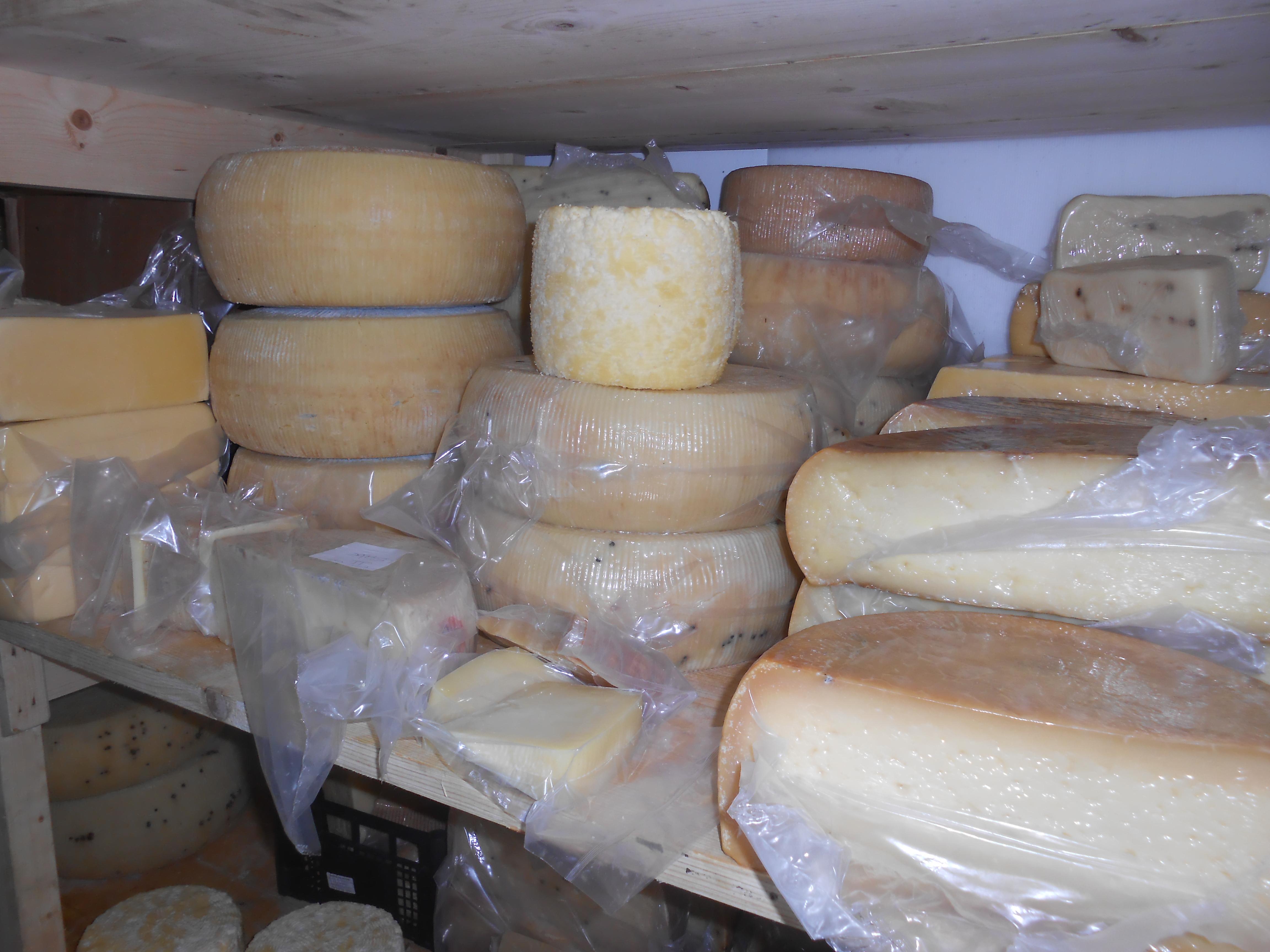 forme formaggio siciliano